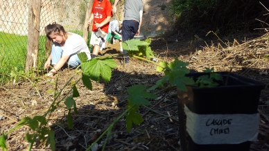 Students helping plant.